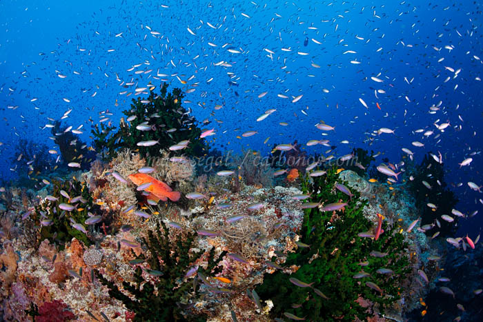 Image 1288, . Carl's Ultimate, Eastern Fields, Papua New Guinea, Matt Segal, all rights reserved worldwide.  Keywords: