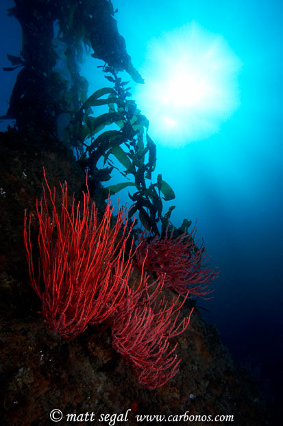 Image 920, . Santa Cruz Island, Channel Islands, CA, United States, Matt Segal, all rights reserved worldwide.  Keywords: