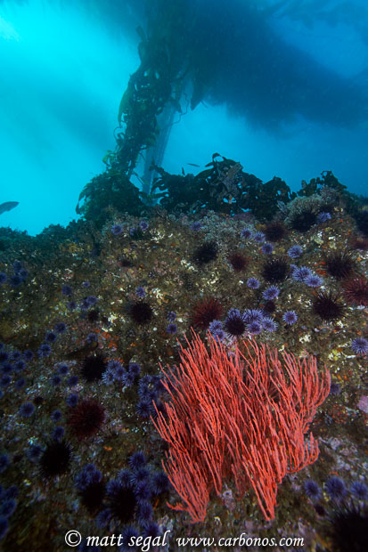 Image 915, . Santa Cruz Island, Channel Islands, CA, United States, Matt Segal, all rights reserved worldwide.  Keywords: