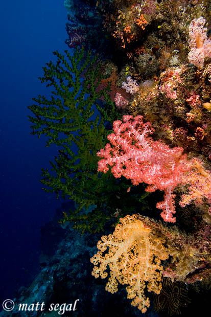 Image 567, . Leru Cut, Russell Islands, Solomon Islands, Matt Segal, all rights reserved worldwide.  Keywords: